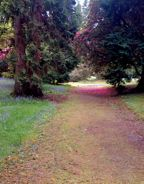path, trees and pink petals